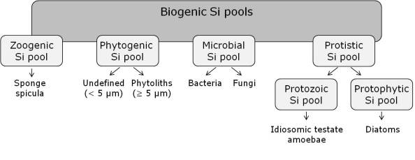 Fig. 1: Biogenic silicon (Si) pools in terrestrial ecosystems (from Puppe et al. 2015).